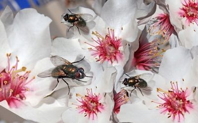 TOP WAYS TO MANAGE PESTS INVASION AT RESORT HOTELS